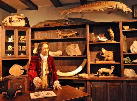 Exponate Naturkundemuseum