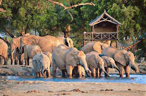 "Tansania. Safari ""Tansania Highlights"" © DER Touristik"