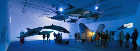 Im Einstimmungssaal der Wal-Ausstellung tauchen große und kleine Besucher unmittelbar in die Welt der Wale ab. Foto: LWL/Oblonczyk