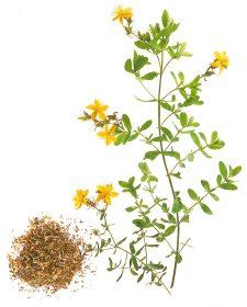 Johanniskraut ist ein natürliches Aufbaumittel bei Nervosität, nervösen Erschöpfungszustände Foto: Wirths PR / Schoenenberger