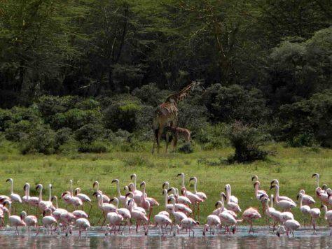 """Gerade in trockenen Regionen Afrikas sind Feuchtgebiete wichtig für den Erhalt der Artenvielfalt. Das Projekt """"GlobE – Wetlands in East Africa"""" erarbeitet Richtlinien, um Nutzungsbereiche wie auch Schutzzonen in Feuchtgebieten auszuweisen. © Foto: Miguel Alvarez/Uni Bonn"""
