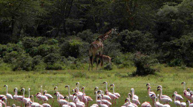 Welttag der Feuchtgebiete: Nachhaltige Nutzung afrikanischer Feuchtgebiete
