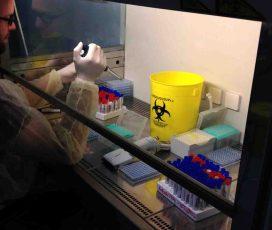 Im Labor des saudischen Gesundheitsministeriums in Riad:Sebastian Brünink, Mitarbeiter von Prof. Dr. Christian Drosten vom Institut für Virologie des Universitätsklinikums Bonn, bei der Durchführung des MERS-Antikörpertests. (c) Foto: Marcel Müller/Uni Bonn