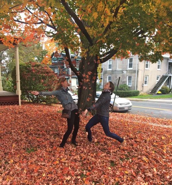 fall leaves foliage