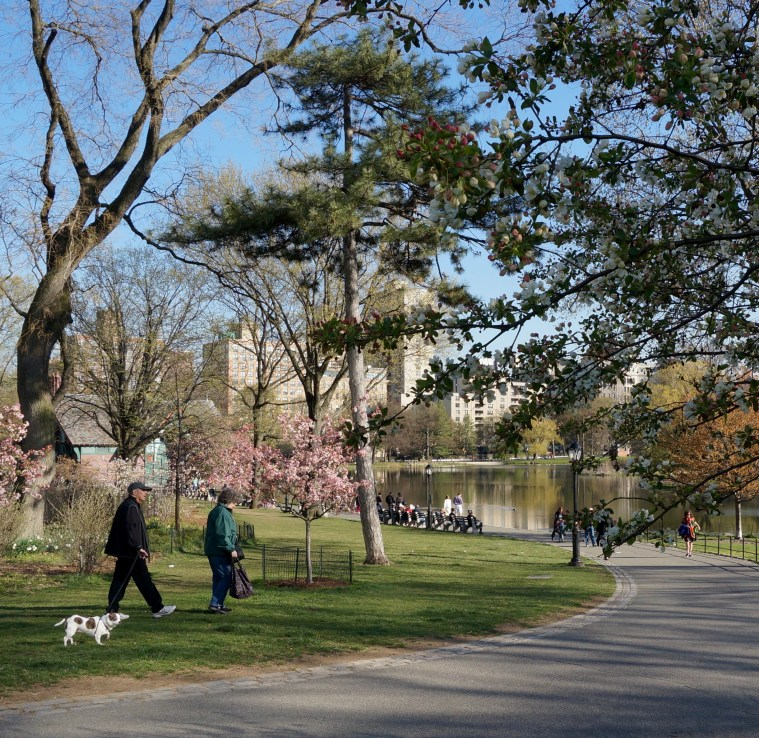 Central-Park-North-walk