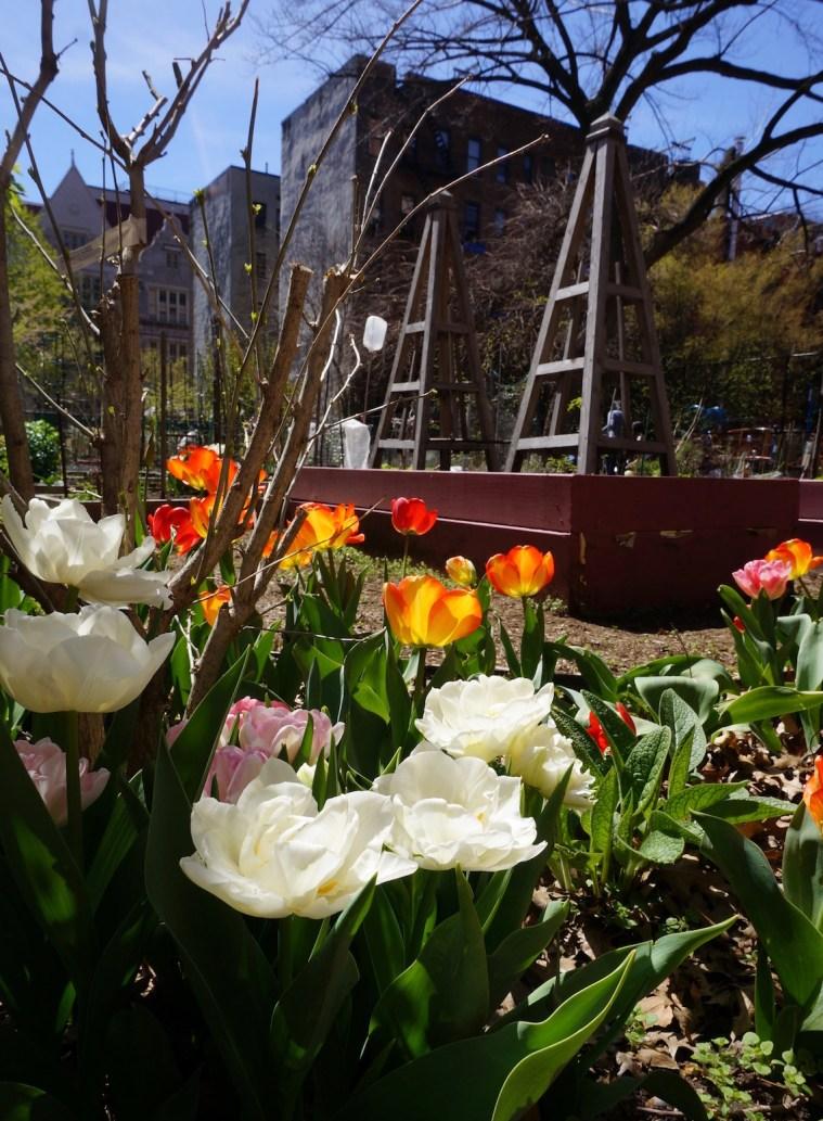 west-side-community-garden