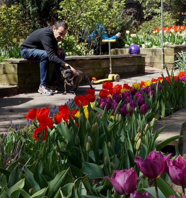 west-side-garden-tulip-festival
