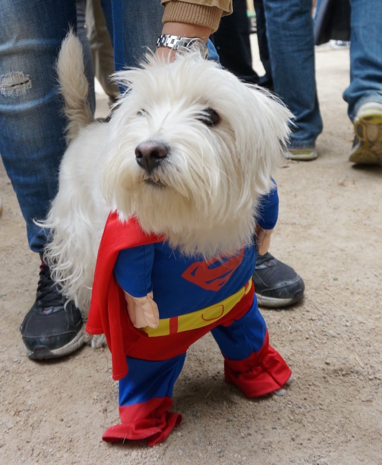 halloween-dog-parade-nyc-superman