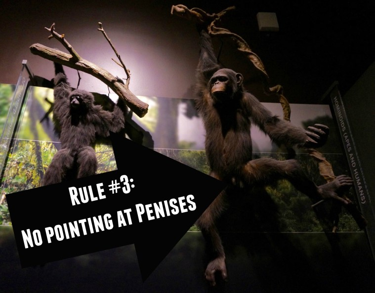 AMNH museum hack mating game rule