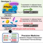 Genetic Variation Determines Protein's Response to Anti-diabetic Drug