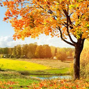 Autumn Woods Fragrance Oil