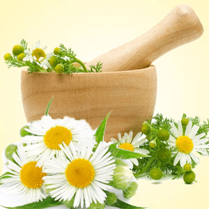 chamomile fragrance