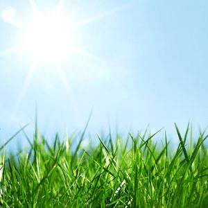 fresh cut grass fragrance