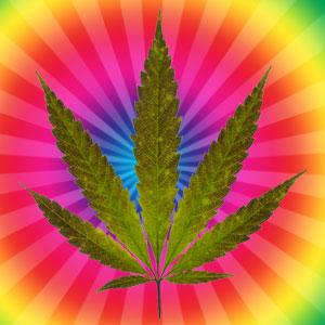 Cannabis Flower Fragrance