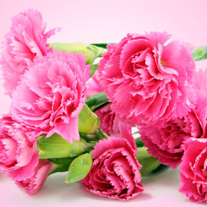 Carnation Fragrance