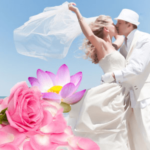 Honeymoon Romance Fragrance Oil