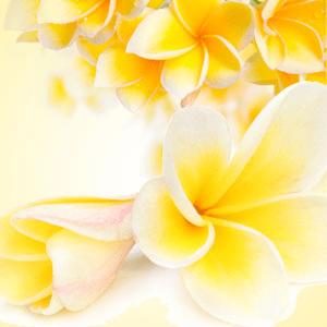 Tiare Flowers Fragrance Oil