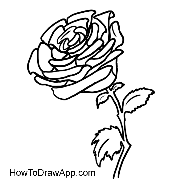 How to draw a rose 11