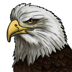 bald eagle head drawing step by step