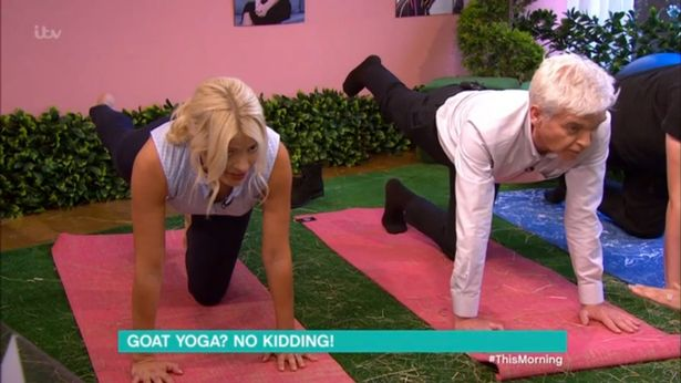 Phillip Schofield Nearly Swars During This Morning While He Does Goat Yoga