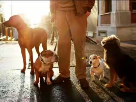 dog-walker-dogs-getty-images-640x480