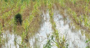 Flood destroys farms in 24 communities in Niger State