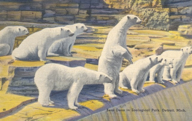polar-bears-zoo