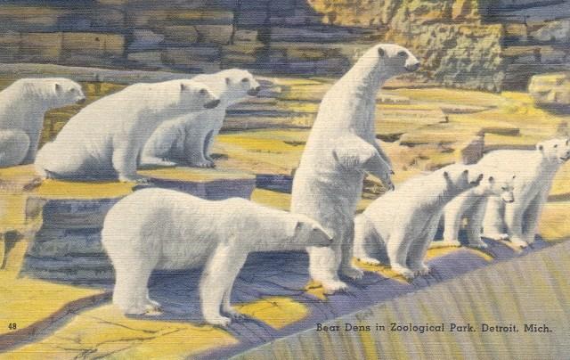 polar-bears-zoo