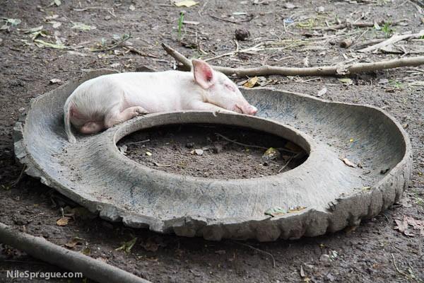 Twice Tired Pig, San Joaquin, La Dalia, Nicaragua