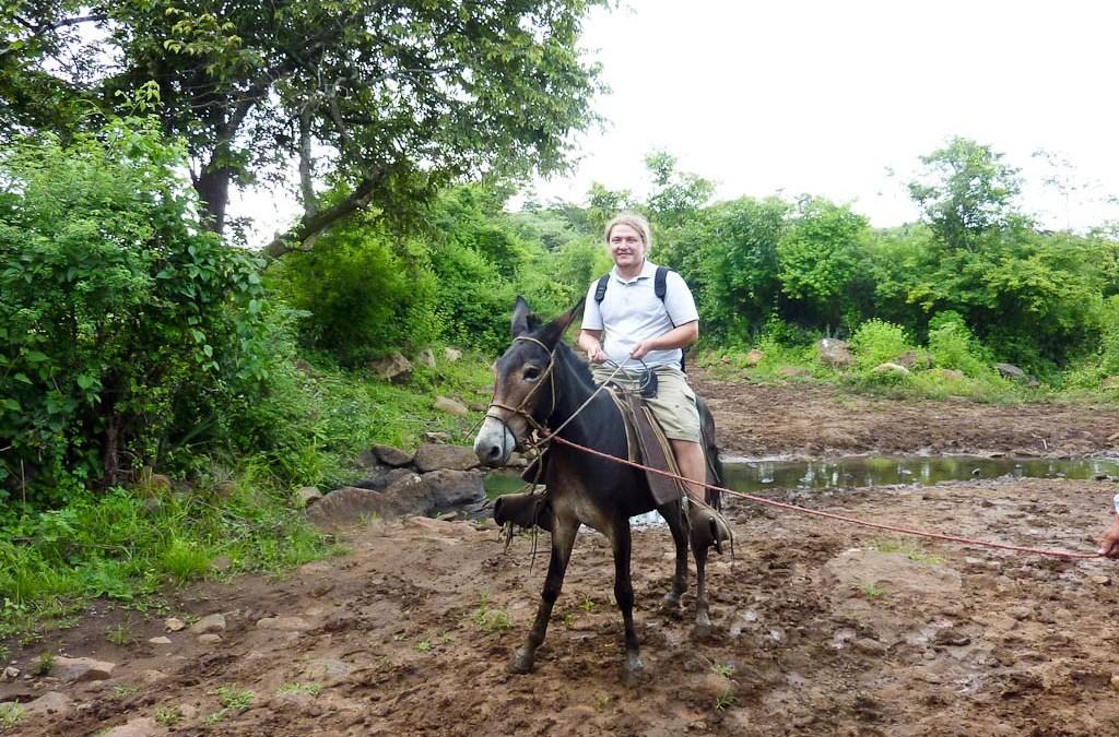 Nile on a mule, El Pavon, Matagalpa District, Nicaragua