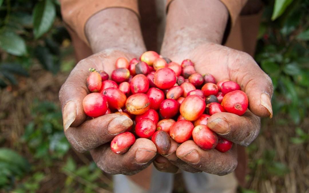 Kenya 2011: Day One – Coffee