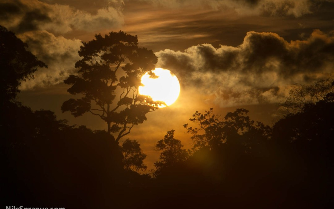 Photo: Sunset over Amazon jungle, near Iquitos, Peru