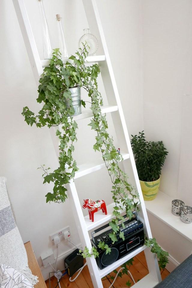 growingplant