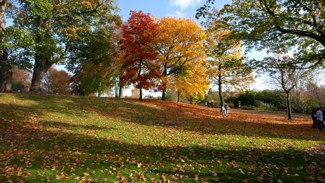 autumninthebotanics