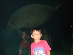 At the dugong aquarium