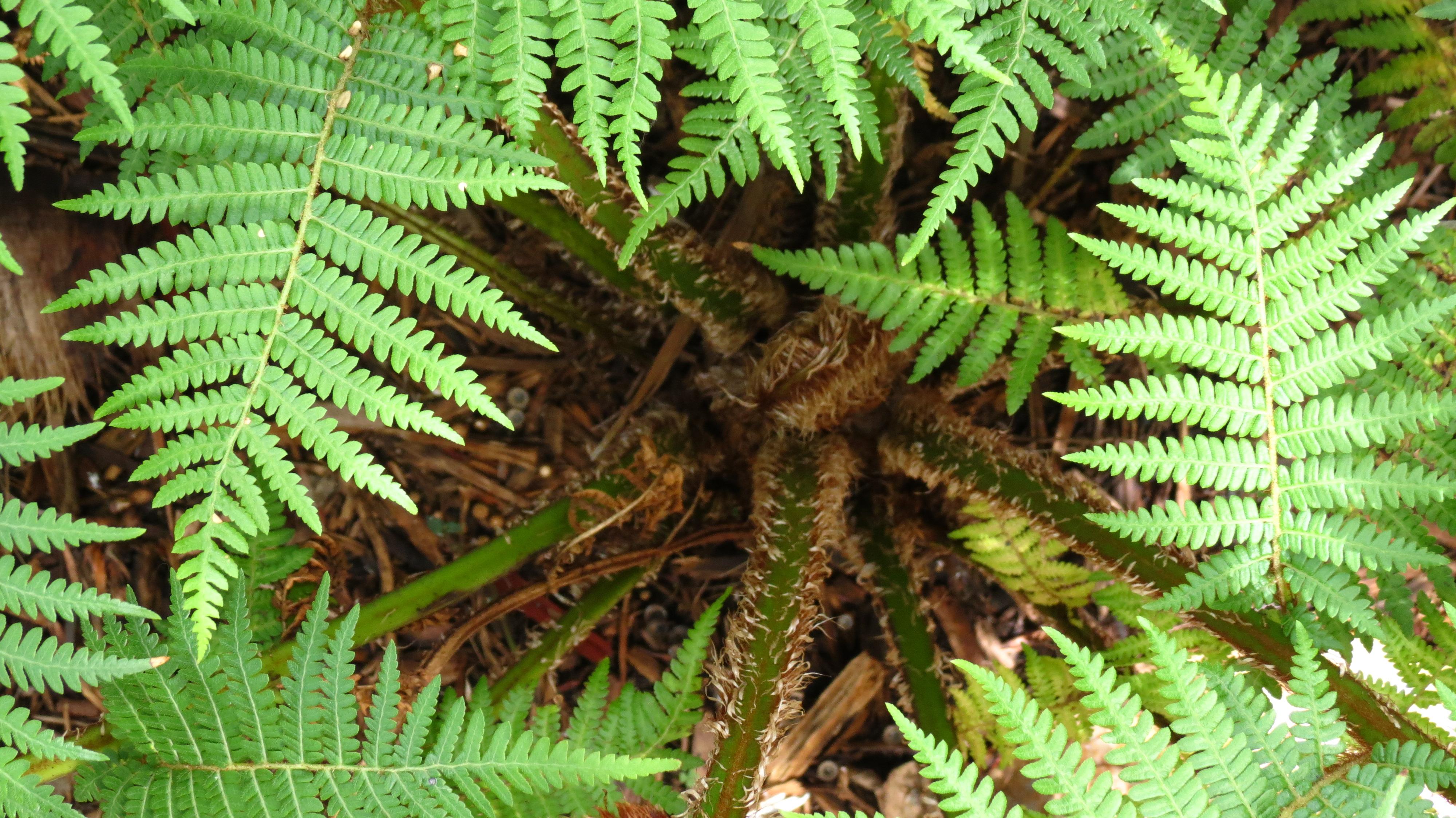 Beautiful Australian Tree Fern Australian Tree Fern Nitty Gritty Dirt Man Australian Tree Fern Cats Australian Tree Fern Hardiness houzz-03 Australian Tree Fern
