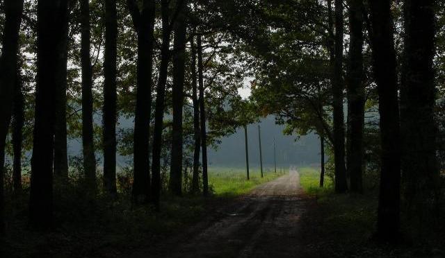 normal_La_route_dans_la_clairiere