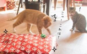 facebookクリスマス猫-01