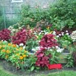 Troy Community Garden.