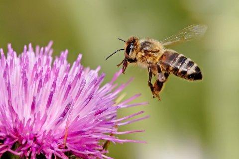 Beekeeping Basics