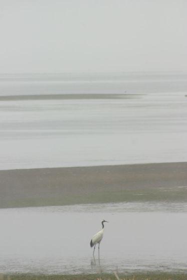 野付半島で撮影した丹頂鶴