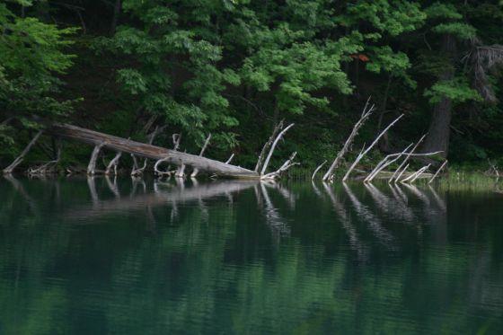 オンネトー3 これもキャンプ場付近。倒れた木が不思議な造形を作っている