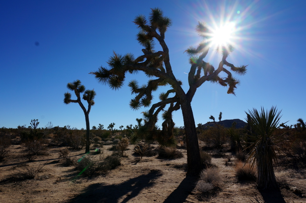Joshua Tree National Park. National Parks to visit