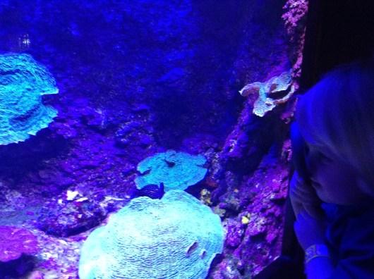 Xcaret Coral Reef Aquarium