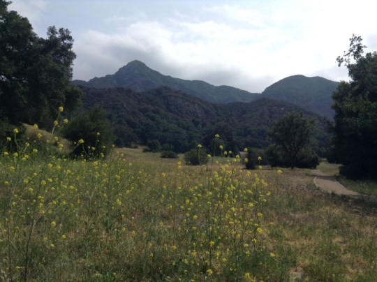 Camping at Malibu Creek State Park