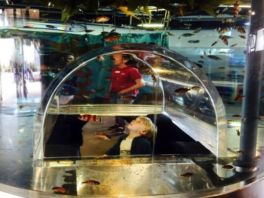 Exploration Center at the Cabrillo Marine Aquarium in San Pedro, CA