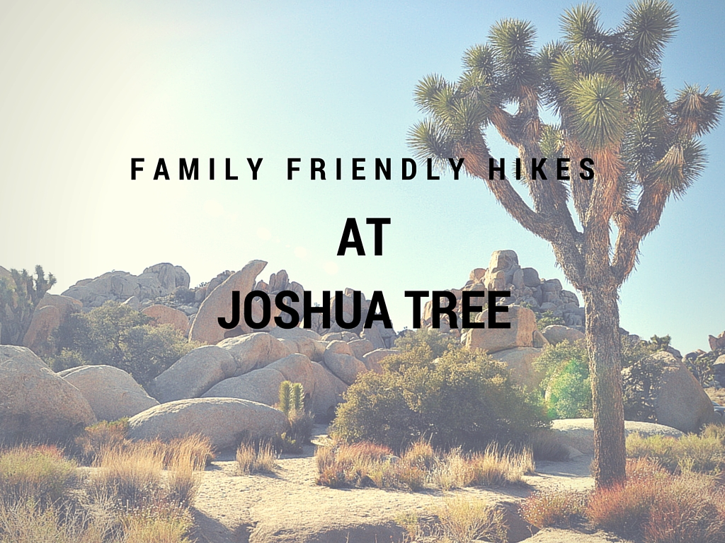 Family Friendly HIkes at Joshua Tree