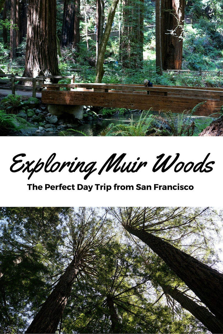 my trip to muir woods Just 12 miles north of the golden gate bridge is muir woods national monument,  on my last trip, i decided to take a day and spend it outside of the city.