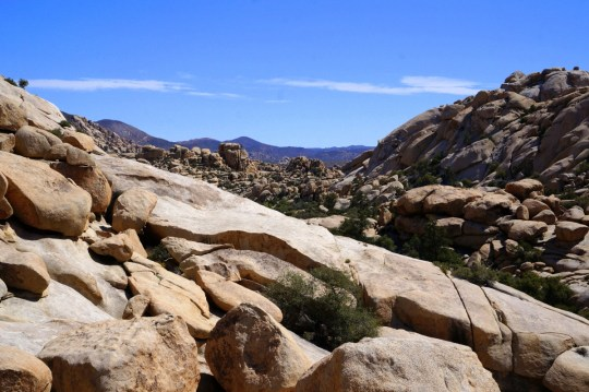 Off the Beaten Path in Joshua Tree