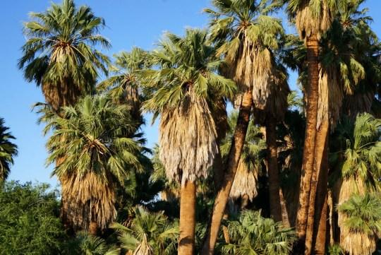 29 Palms Oasis